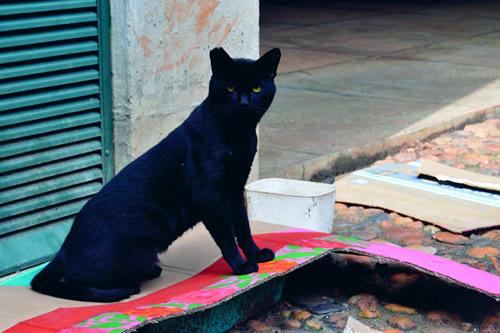 Gato posa para as lentes de Aline Murta Azevedo