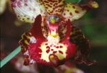 Pesquisa Botânica e Zoologia