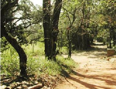 estacao_ecologica_trilha.JPG