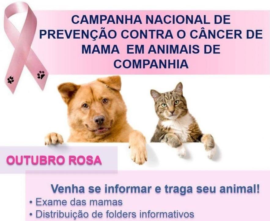 Hospital Veterinário da UFMG promove, no domingo, a campanha de prevenção contra câncer de mama em animais